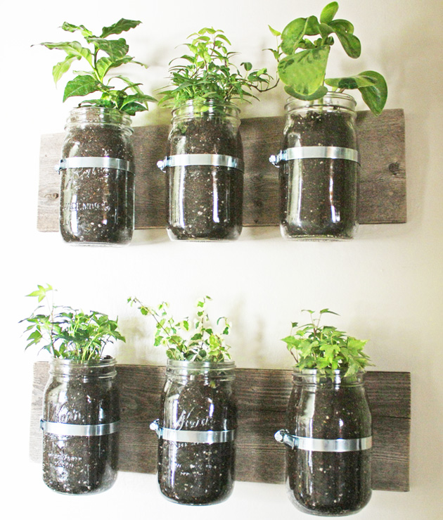 pote de vidro com plantas