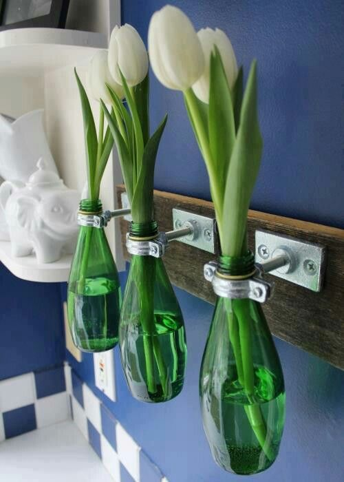 plantas em garrafa